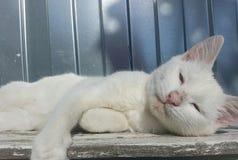 Katten vit, härligt som är gullig, solen, väggen, djuret, husdjuret, päls, kattungen, innehållet, naturen, färg, barn som är lyck royaltyfri fotografi