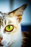 Katten vänder mot Arkivfoto
