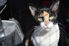 Kattenbeeld Stock Foto's