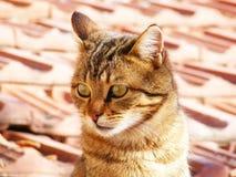 Kattenbeelden, kattenogen, beelden van de mooiste kattenogen, leuke kat, onschuldige kattenbeelden, de beelden van de close-upkat Stock Fotografie