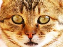 Kattenbeelden, kattenogen, beelden van de mooiste kattenogen, leuke kat, onschuldige kattenbeelden, de beelden van de close-upkat Royalty-vrije Stock Foto's