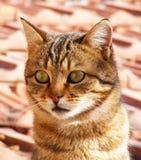 Kattenbeelden, kattenogen, beelden van de mooiste kattenogen, leuke kat, onschuldige kattenbeelden, de beelden van de close-upkat Royalty-vrije Stock Fotografie