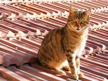 Kattenbeelden, kattenogen, beelden van de mooiste kattenogen, leuke kat, onschuldige kattenbeelden, de beelden van de close-upkat Stock Foto's