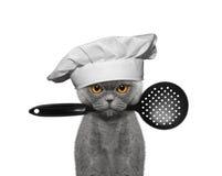 Kattenchef-kok die een lepel in zijn mond houden stock afbeeldingen