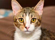 Kattenclose-up Royalty-vrije Stock Afbeeldingen