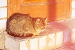 Kattenclose-up in zonrust op oude weg het concept emotie is arr stock foto