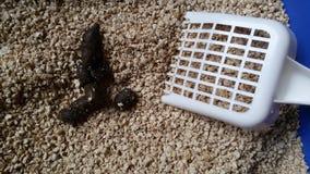 Kattendraagstoel met uitwerpsel Stock Foto's