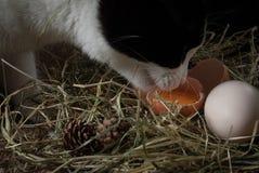 Kattendranken Stock Foto