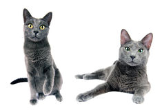 Kattenfamilie Stock Foto's