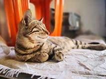 Kattenfamilie die in het huis leven royalty-vrije stock foto's