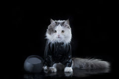 Kattenfietser Stock Fotografie