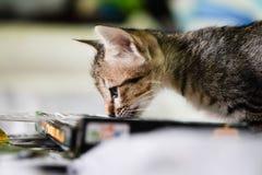 Kattengeur een boek op het bed Stock Foto