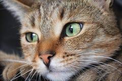 Kattengezicht Royalty-vrije Stock Fotografie