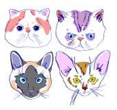 Kattengezichten die in beeldverhaalstijl trekken Stock Foto
