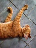 kattenhuisdier Stock Foto's