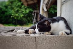 Kattenhuisdier het kijken Royalty-vrije Stock Fotografie