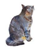Kattenillustratie op een witte achtergrond De illustratie van de waterverf Royalty-vrije Stock Afbeeldingen