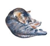 Kattenillustratie op een witte achtergrond De illustratie van de waterverf Stock Afbeelding