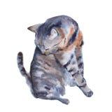 Kattenillustratie op een witte achtergrond De illustratie van de waterverf Royalty-vrije Stock Fotografie