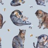 Kattenillustratie op een witte achtergrond De illustratie van de waterverf Royalty-vrije Stock Afbeelding