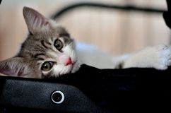 Kattenkatje Royalty-vrije Stock Afbeeldingen