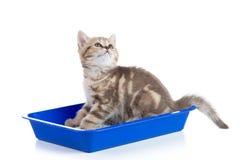 Kattenkatje in de doos van het toiletdienblad met draagstoel op wit stock afbeelding