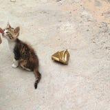 Kattenkatje in de straat stock fotografie
