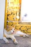 Kattenkielzog omhoog royalty-vrije stock fotografie