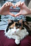 Kattenliefde Royalty-vrije Stock Afbeeldingen