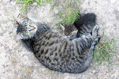 Kattenmoeder en haar katje stock fotografie