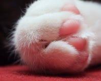 Kattenpoot Stock Foto