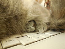 Kattenpoot, op laptop Royalty-vrije Stock Afbeelding