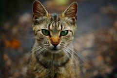Kattenportret Royalty-vrije Stock Foto