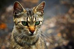 Kattenportret Stock Afbeeldingen