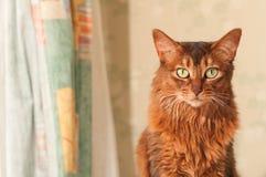 Kattenportret thuis Stock Foto