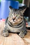 Kattenportretten Royalty-vrije Stock Foto's