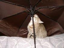 Kattenpot onder de paraplu Royalty-vrije Stock Afbeeldingen