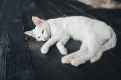 Kattenpot weinig zachte witte achtergrond binnen Royalty-vrije Stock Foto's