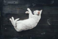 Kattenpot weinig zachte witte achtergrond binnen Stock Foto