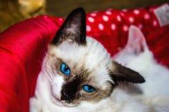Kattenpuppy royalty-vrije stock afbeeldingen