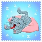 Kattenras Britse kat Royalty-vrije Stock Afbeeldingen