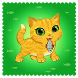 Kattenras Ginger Cat Stock Foto
