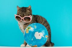 Kattenreiziger de kat komt op vakantie samen royalty-vrije stock afbeeldingen