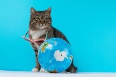 Kattenreiziger de kat komt op vakantie samen stock foto