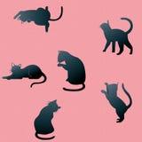 Kattenschaduwen Stock Foto's