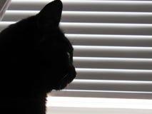 Kattensilhouet dichtbij witte zonneblinden Stock Foto's