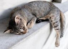 Kattenslaap Royalty-vrije Stock Foto
