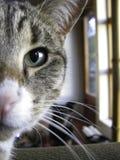 Kattenslaap als oma'svoorzitter Royalty-vrije Stock Foto's