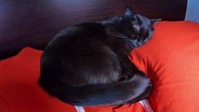 Kattenslaap in bed stock videobeelden