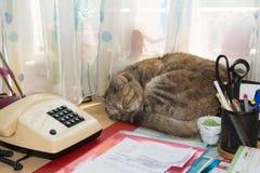 Kattenslaap bij bureau Stock Afbeelding